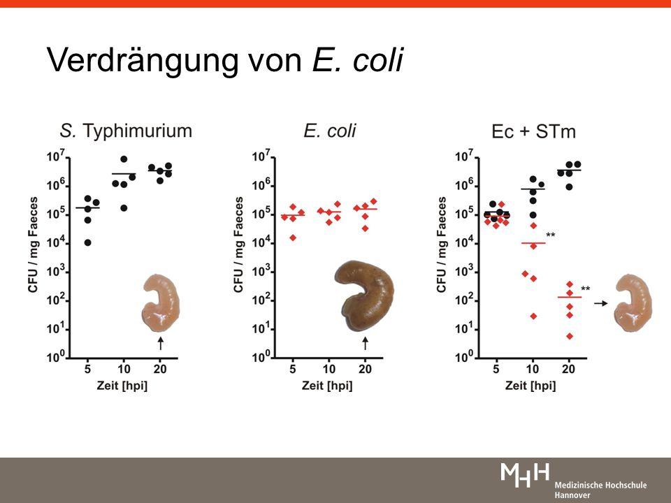 Einfluss der Virulenzfaktoren Reproduktion wichtiger Aspekte der Kommensalen-Unterdrückung Co-Kolonisierung: E.