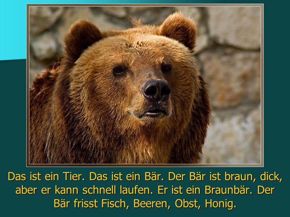 Das ist ein Tier. Das ist ein Bär. Der Bär ist braun, dick, aber er kann schnell laufen. Er ist ein Braunbär. Der Bär frisst Fisch, Beeren, Obst, Honi