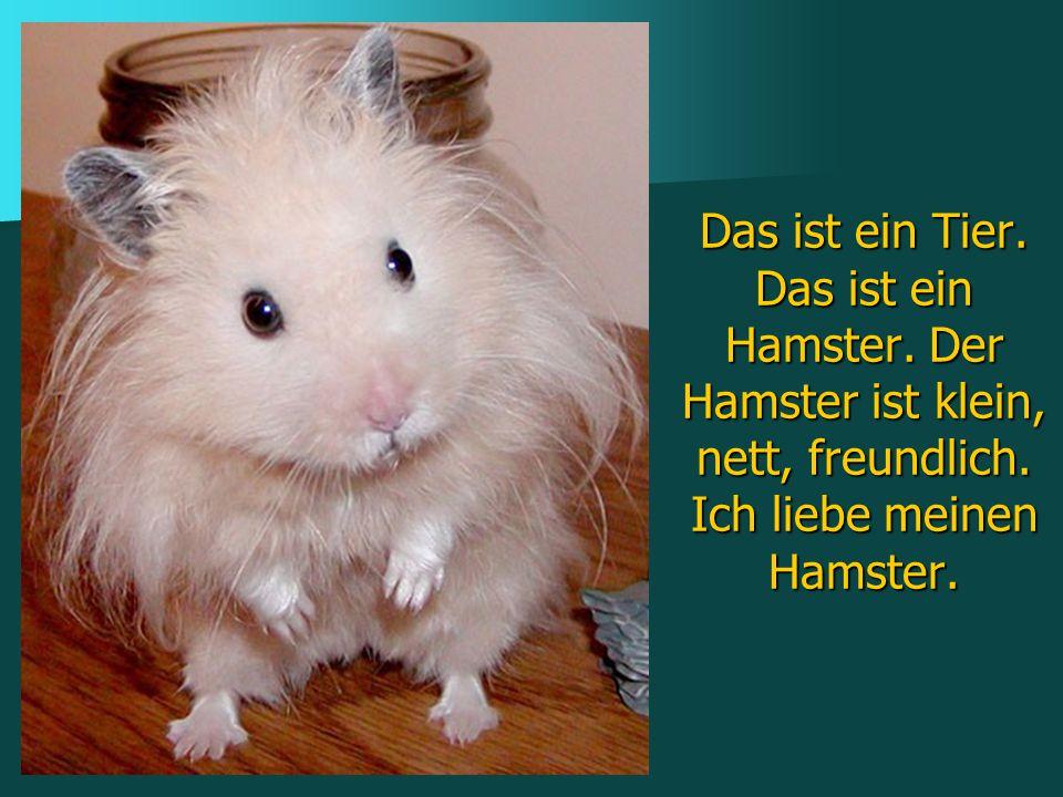 Das ist ein Tier. Das ist ein Hamster. Der Hamster ist klein, nett, freundlich. Ich liebe meinen Hamster.