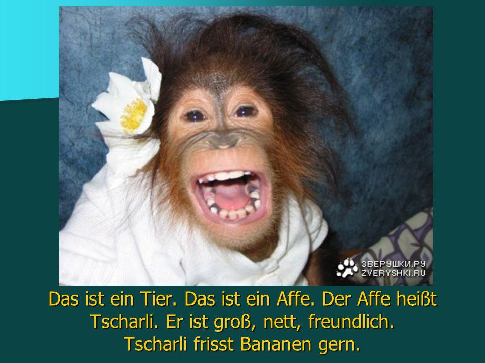 Das ist ein Tier. Das ist ein Affe. Der Affe heißt Tscharli. Er ist groß, nett, freundlich. Tscharli frisst Bananen gern.