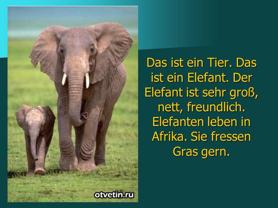 Das ist ein Tier. Das ist ein Elefant. Der Elefant ist sehr groß, nett, freundlich. Elefanten leben in Afrika. Sie fressen Gras gern.