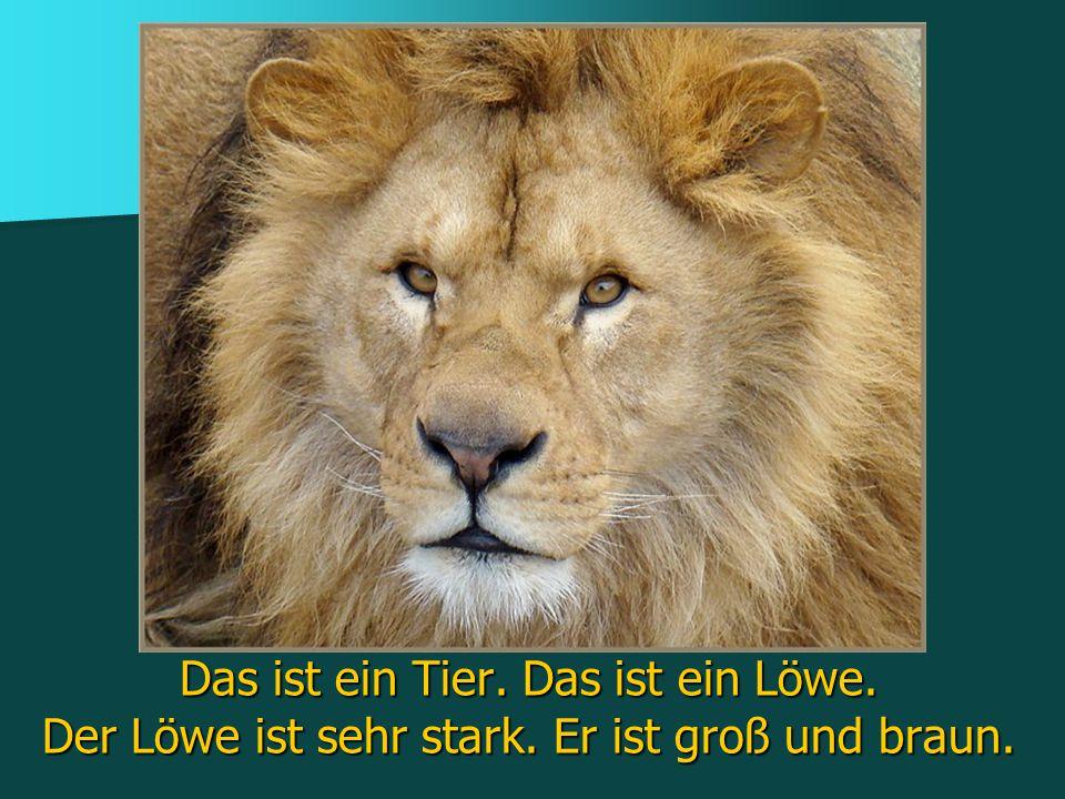 Das ist ein Tier. Das ist ein Löwe. Der Löwe ist sehr stark. Er ist groß und braun.