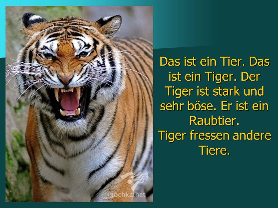Das ist ein Tier. Das ist ein Tiger. Der Tiger ist stark und sehr böse. Er ist ein Raubtier. Tiger fressen andere Tiere.