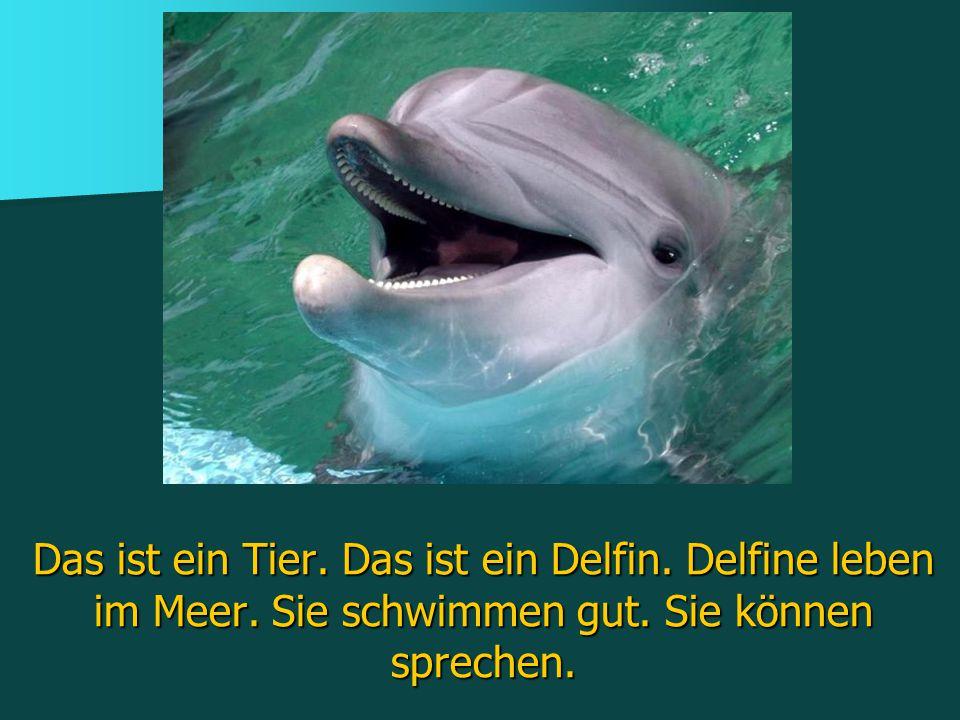 Das ist ein Tier.Das ist ein Delfin. Delfine leben im Meer.