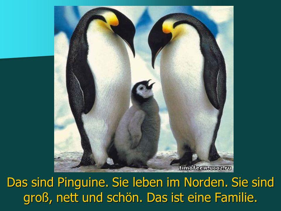 Das sind Pinguine. Sie leben im Norden. Sie sind groß, nett und schön. Das ist eine Familie.