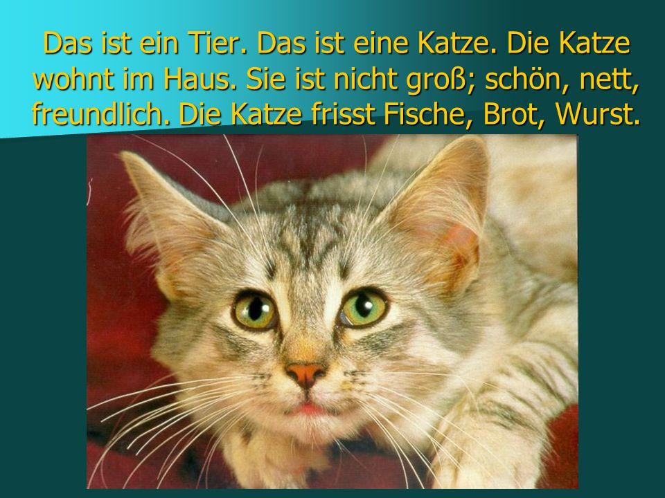 Das ist ein Tier. Das ist eine Katze. Die Katze wohnt im Haus. Sie ist nicht groß; schön, nett, freundlich. Die Katze frisst Fische, Brot, Wurst.