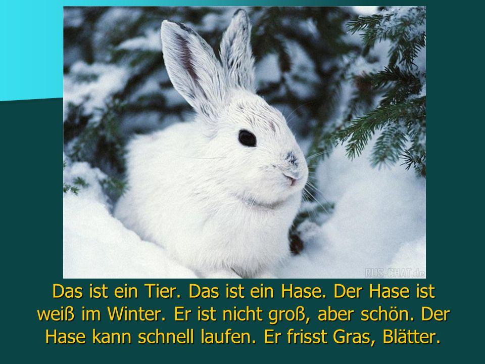 Das ist ein Tier. Das ist ein Hase. Der Hase ist weiß im Winter. Er ist nicht groß, aber schön. Der Hase kann schnell laufen. Er frisst Gras, Blätter.