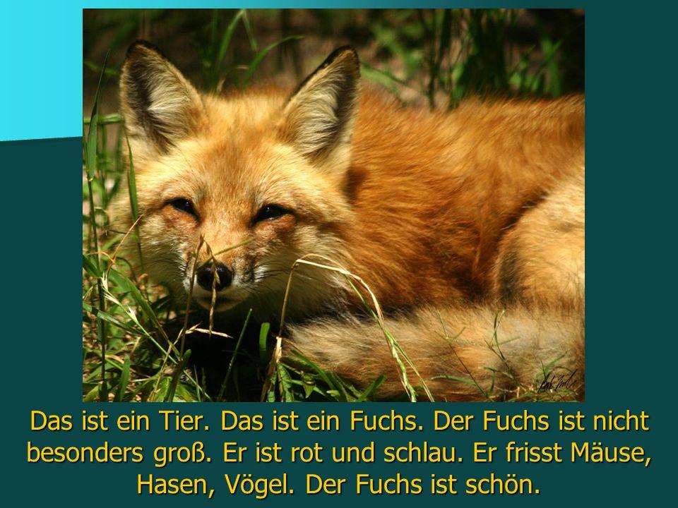 Das ist ein Tier. Das ist ein Fuchs. Der Fuchs ist nicht besonders groß. Er ist rot und schlau. Er frisst Mäuse, Hasen, Vögel. Der Fuchs ist schön.