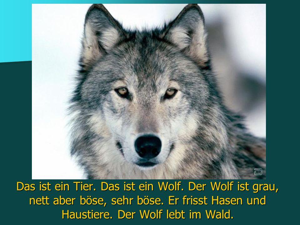 Das ist ein Tier. Das ist ein Wolf. Der Wolf ist grau, nett aber böse, sehr böse. Er frisst Hasen und Haustiere. Der Wolf lebt im Wald.