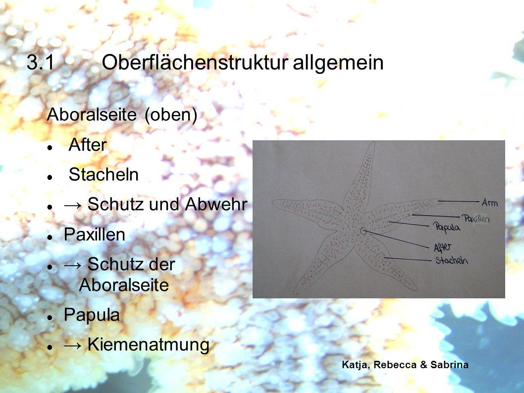 Katja, Rebecca & Sabrina Oralseite (unten) Mund Stacheln Schutz und Abwehr Verschiedene Füßchentypen (z.B.