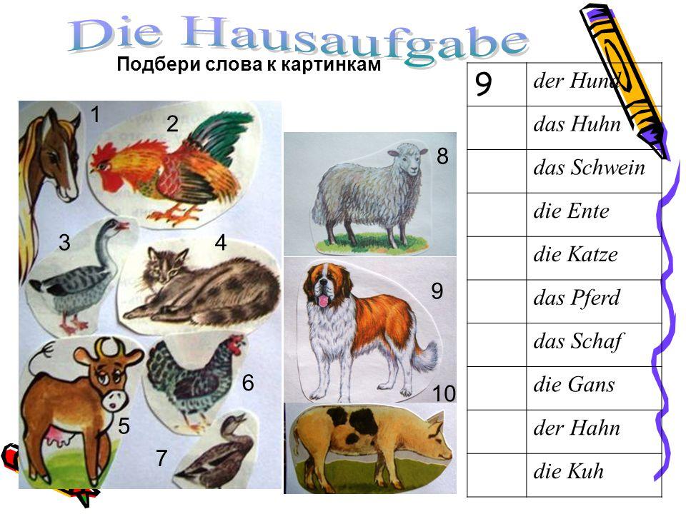 Подбери слова к картинкам 9 der Hund das Huhn das Schwein die Ente die Katze das Pferd das Schaf die Gans der Hahn die Kuh 1 6 7 8 9 10 5 4 2 3