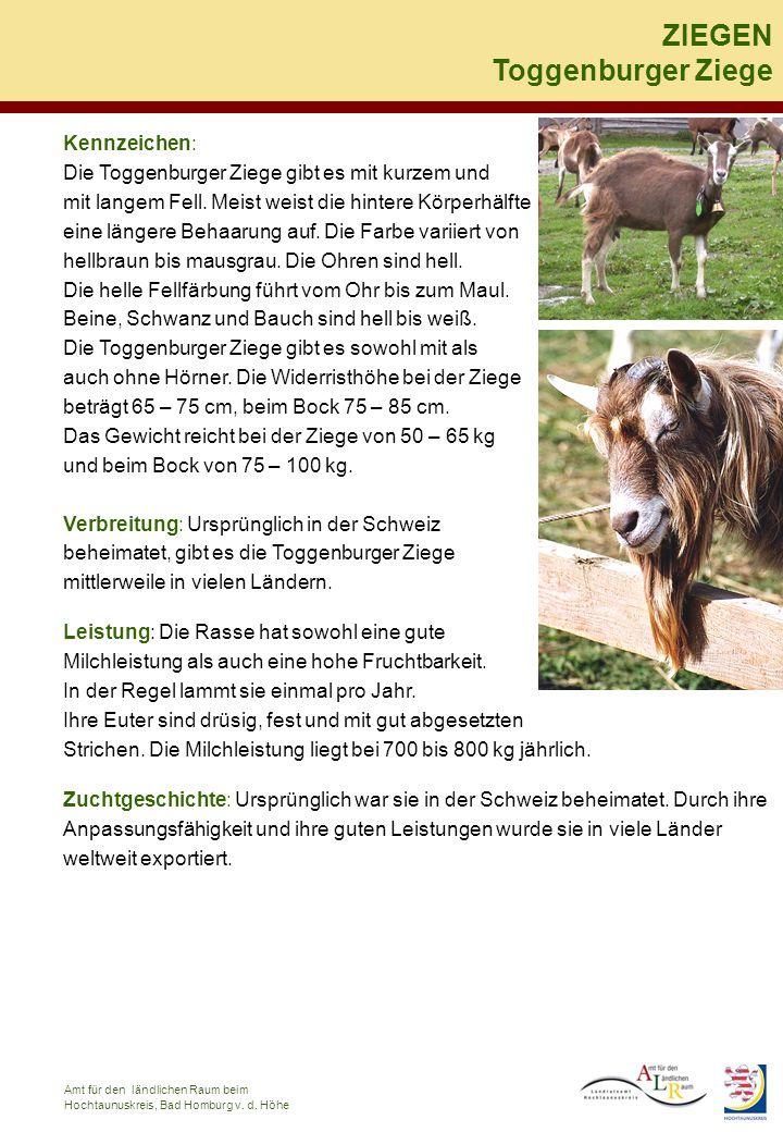 Kennzeichen: Die Toggenburger Ziege gibt es mit kurzem und mit langem Fell. Meist weist die hintere Körperhälfte eine längere Behaarung auf. Die Farbe