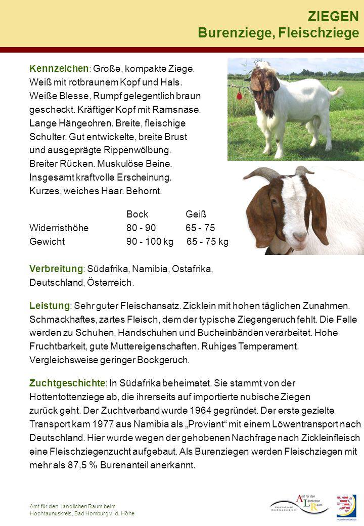 Kennzeichen: Große, kompakte Ziege. Weiß mit rotbraunem Kopf und Hals. Weiße Blesse, Rumpf gelegentlich braun gescheckt. Kräftiger Kopf mit Ramsnase.