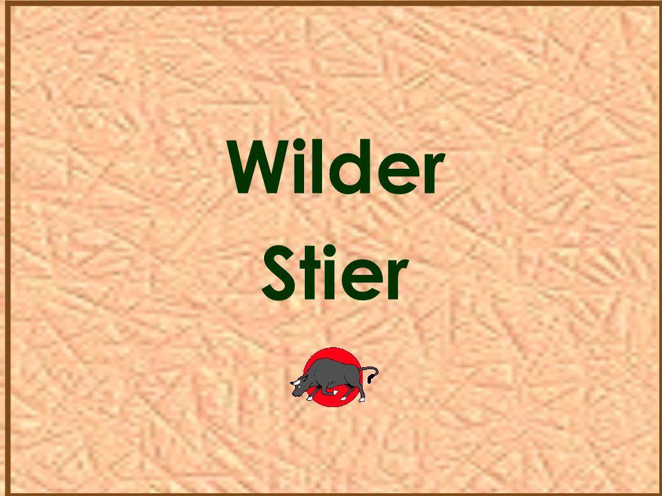 Wilder Stier