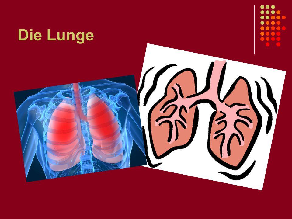 Die Lunge