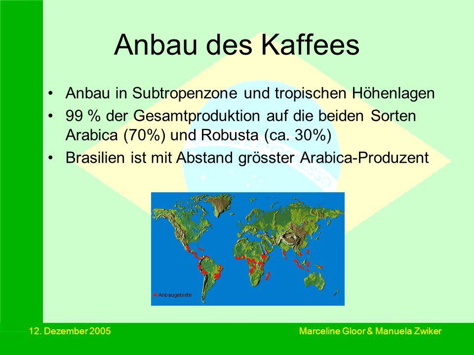 12. Dezember 2005 Anbau des Kaffees Anbau in Subtropenzone und tropischen Höhenlagen 99 % der Gesamtproduktion auf die beiden Sorten Arabica (70%) und