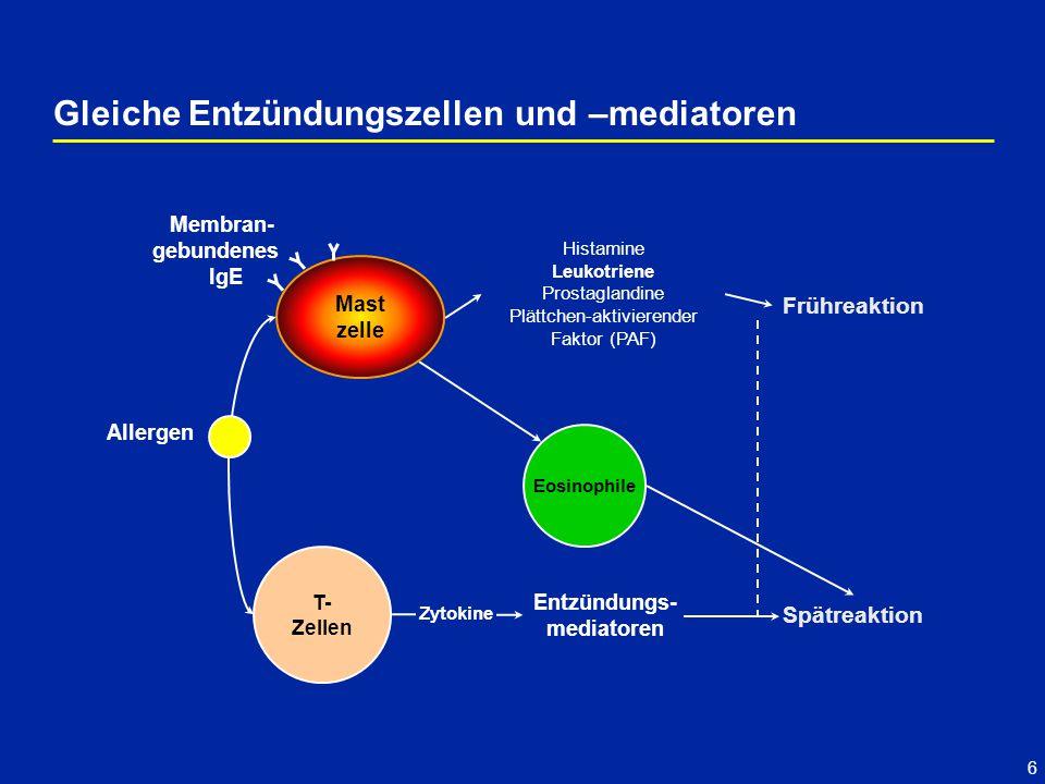 6 Gleiche Entzündungszellen und –mediatoren Frühreaktion Spätreaktion T- Zellen Entzündungs- mediatoren Allergen Zytokine Histamine Leukotriene Prostaglandine Plättchen-aktivierender Faktor (PAF) Eosinophile Membran- gebundenes IgE Mast zelle