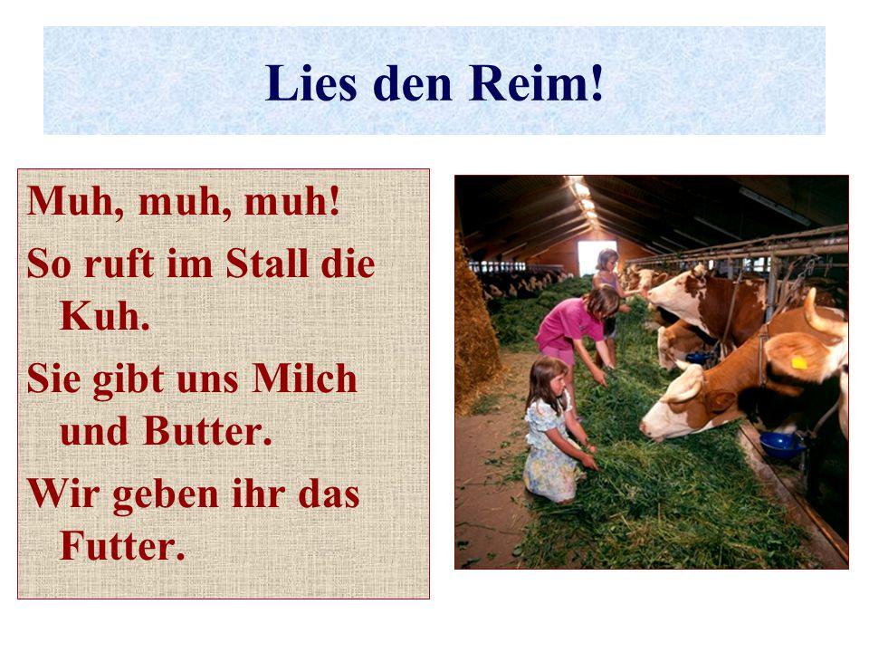Lies den Reim! Muh, muh, muh! So ruft im Stall die Kuh. Sie gibt uns Milch und Butter. Wir geben ihr das Futter.