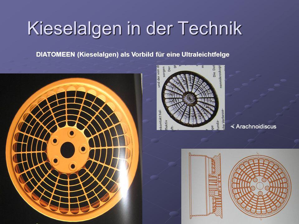 Kieselalgen in der Technik DIATOMEEN (Kieselalgen) als Vorbild für eine Ultraleichtfelge Arachnoidiscus