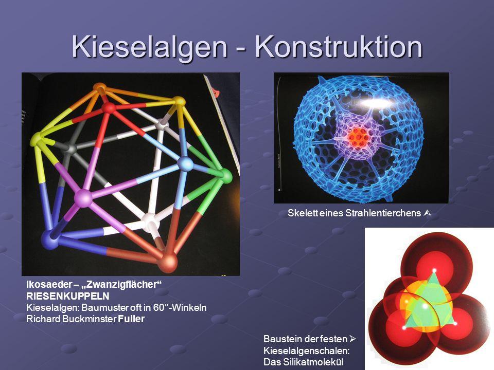 Kieselalgen - Konstruktion Ikosaeder – Zwanzigflächer RIESENKUPPELN Kieselalgen: Baumuster oft in 60°-Winkeln Richard Buckminster Fuller Skelett eines