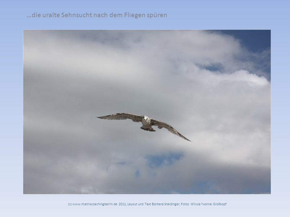 …die uralte Sehnsucht nach dem Fliegen spüren (c) www.matrixcoachingberlin.de 2011, Layout und Text Barbara Steldinger, Fotos Wirula Yvonne Großkopf