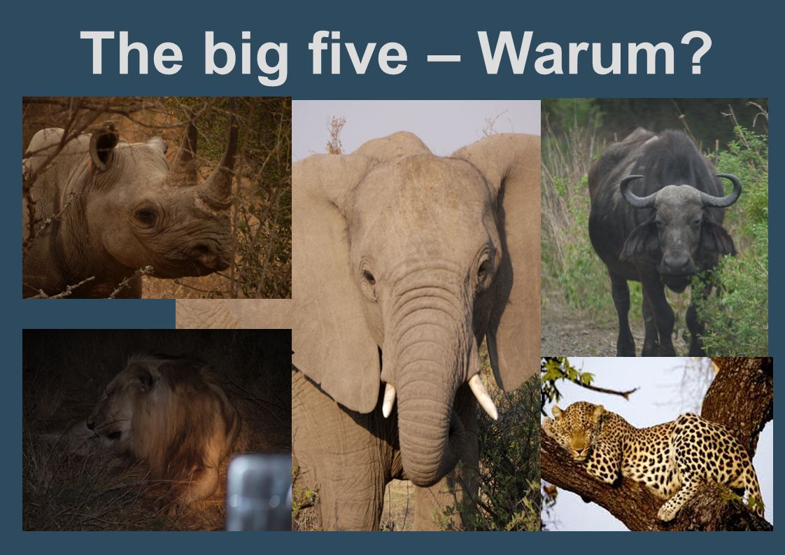The big five – Warum?