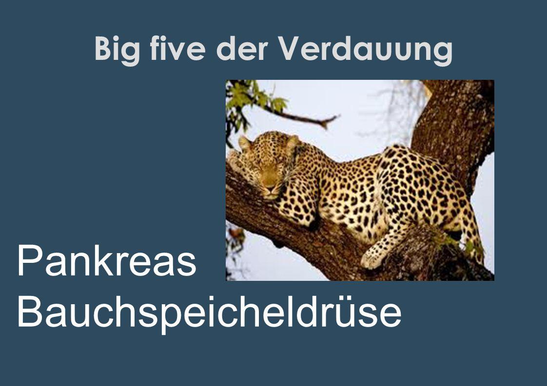 Big five der Verdauung Pankreas Bauchspeicheldrüse