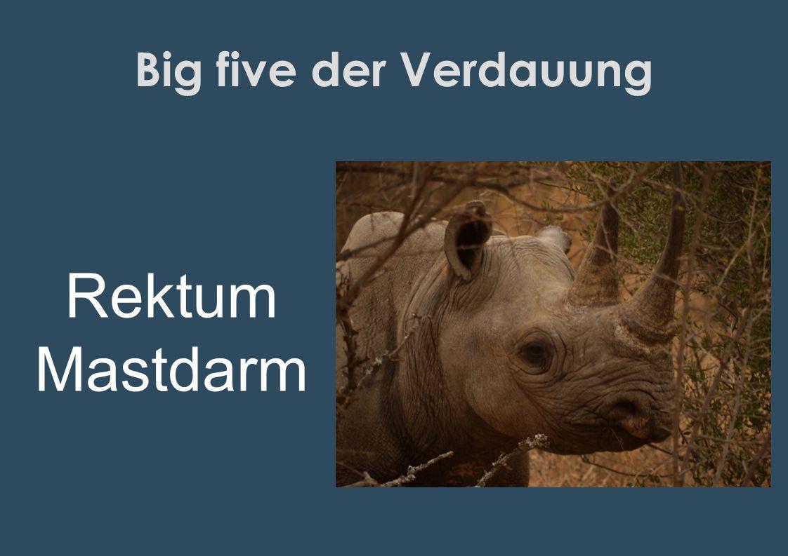 Big five der Verdauung Rektum Mastdarm