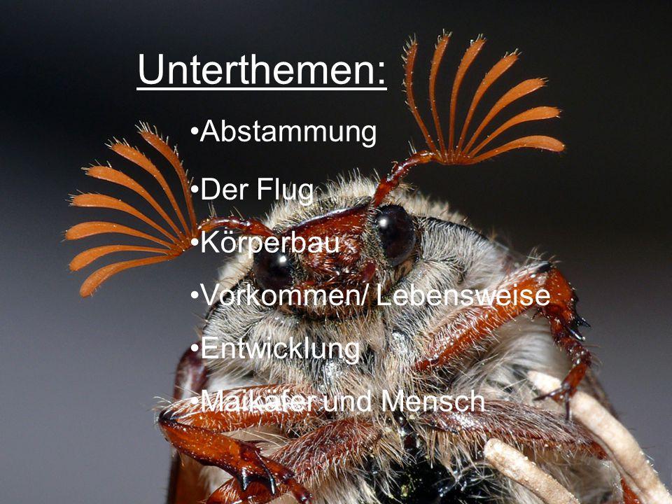 Unterthemen: Abstammung Der Flug Körperbau Vorkommen/ Lebensweise Entwicklung Maikäfer und Mensch