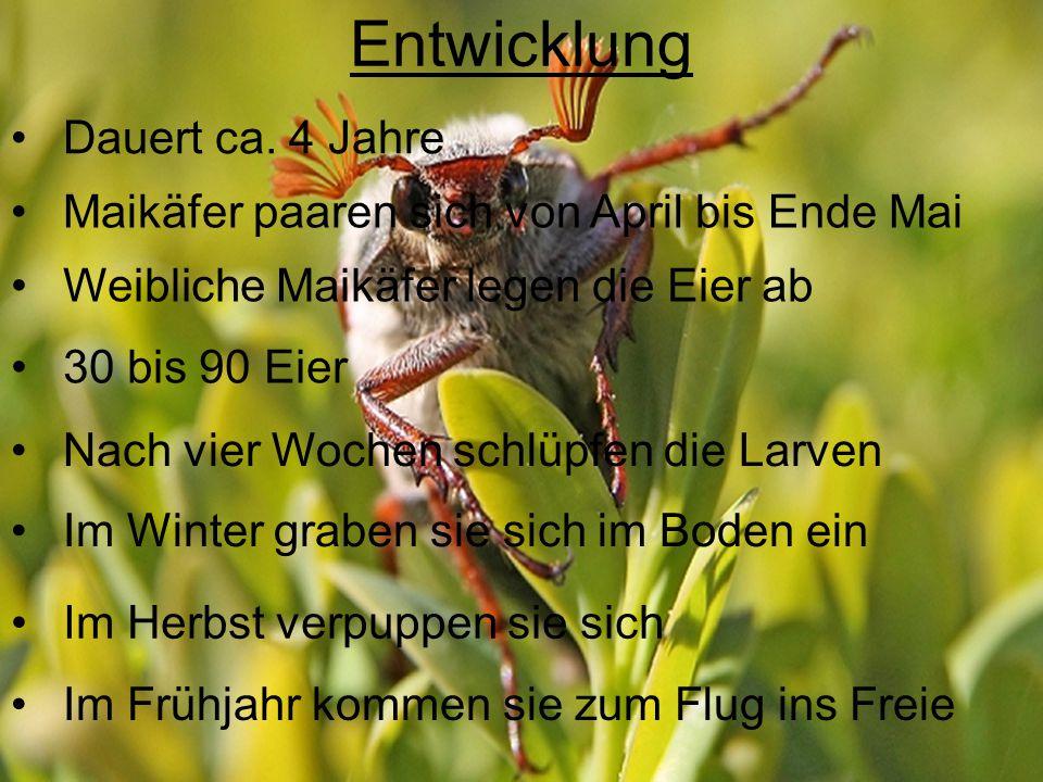 Maikäfer und Mensch Peterchens Mondfahrt Max und Moritz Bekämpfung mit Insektizid DDT Population ging auch in nicht aktiven Gebieten zurück Population erholte sich 2010 erstmals wieder DDT verwendet Bis Mitte 20.
