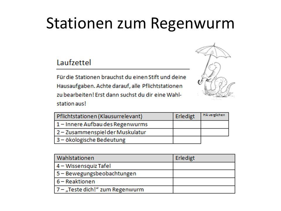 Station 1 Strickleiternervensystem: -Verläuft auf Bauchseite - 2 Stränge, in jedem Segment mit Quer- verbindung