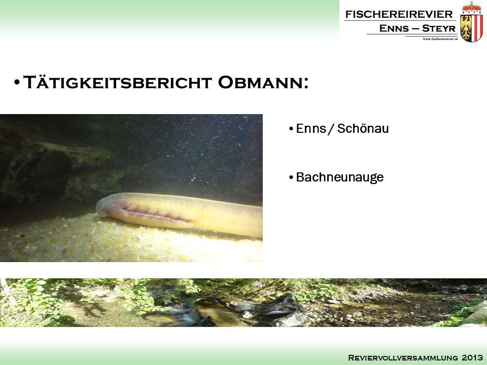 Enns / Schönau Bachneunauge Tätigkeitsbericht Obmann: Reviervollversammlung 2013