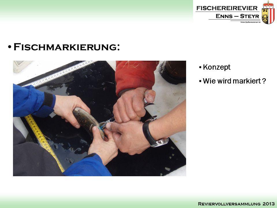 Konzept Wie wird markiert ? Fischmarkierung: Reviervollversammlung 2013