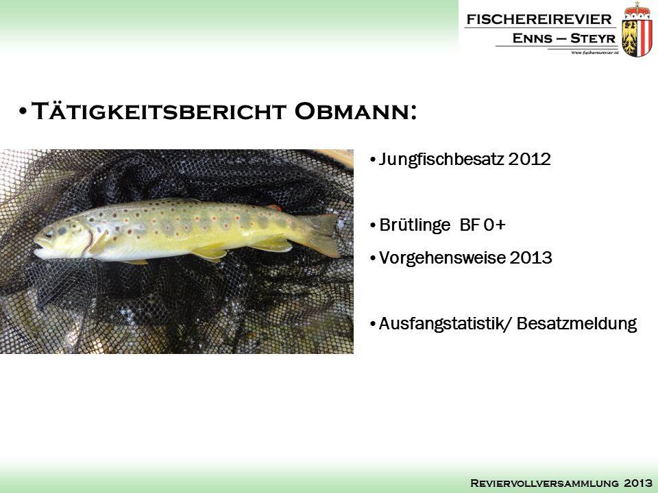 Jungfischbesatz 2012 Brütlinge BF 0+ Vorgehensweise 2013 Ausfangstatistik/ Besatzmeldung Tätigkeitsbericht Obmann: Reviervollversammlung 2013