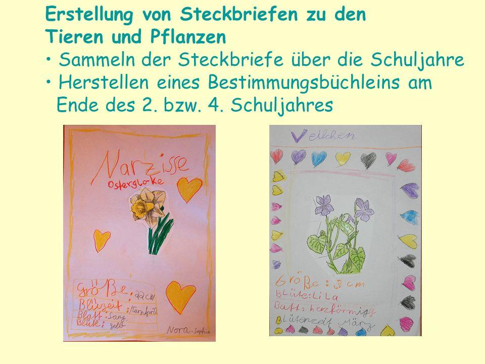 Erstellung von Steckbriefen zu den Tieren und Pflanzen Sammeln der Steckbriefe über die Schuljahre Herstellen eines Bestimmungsbüchleins am Ende des 2.