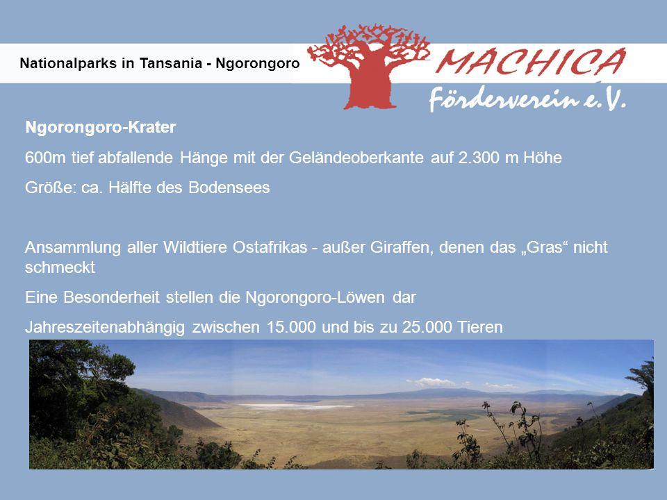 Nationalparks in Tansania - Ngorongoro Ngorongoro-Krater 600m tief abfallende Hänge mit der Geländeoberkante auf 2.300 m Höhe Größe: ca.