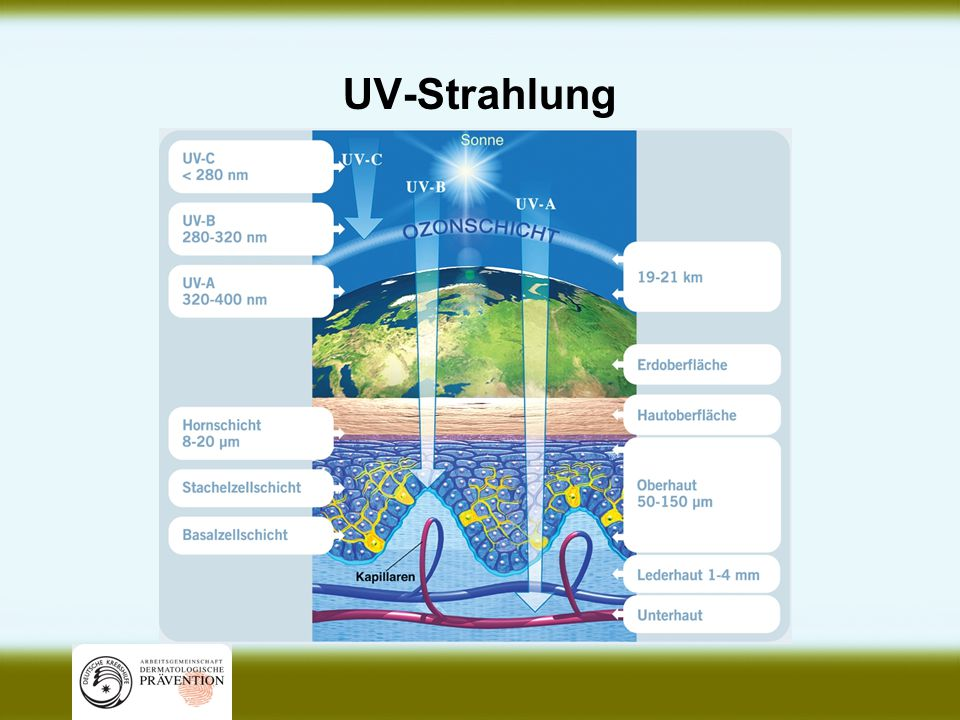 UV-Strahlung geht unter die Haut Produktion von Vitamin D UV-Strahlung ermöglicht dem Körper die Produktion von Vitamin D; 10-15 Minuten Sonne pro Tag auf Gesicht und Arme decken den Tagesbedarf, auch bei bedecktem Himmel.