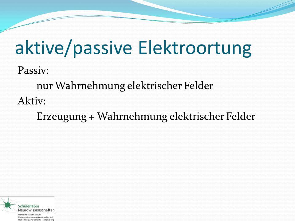 aktive/passive Elektroortung Passiv: nur Wahrnehmung elektrischer Felder Aktiv: Erzeugung + Wahrnehmung elektrischer Felder