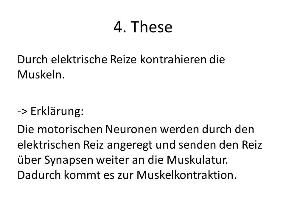 4. These Durch elektrische Reize kontrahieren die Muskeln. -> Erklärung: Die motorischen Neuronen werden durch den elektrischen Reiz angeregt und send