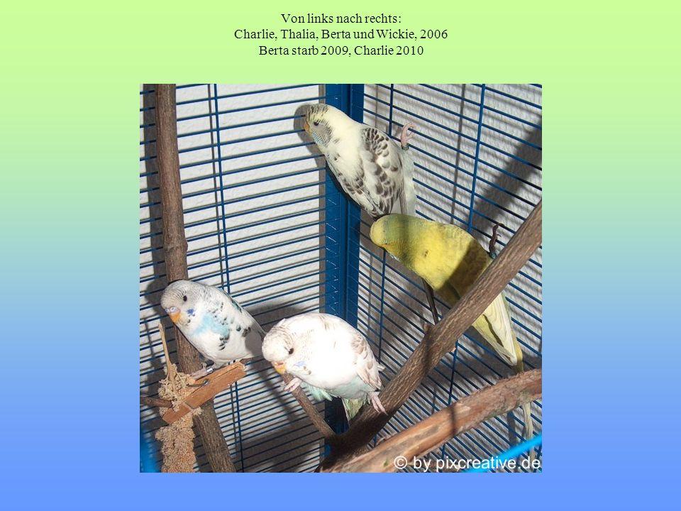 Von links nach rechts: Charlie, Thalia, Berta und Wickie, 2006 Berta starb 2009, Charlie 2010