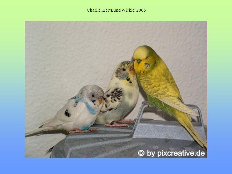Charlie, Berta und Wickie, 2006