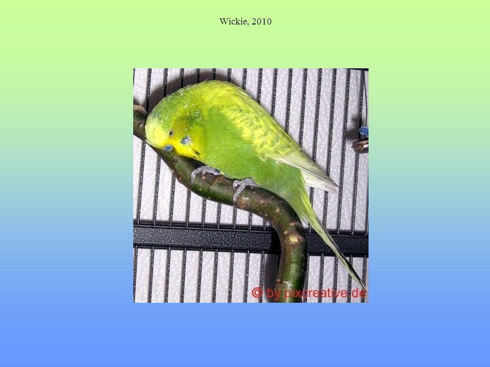 Wickie, 2010