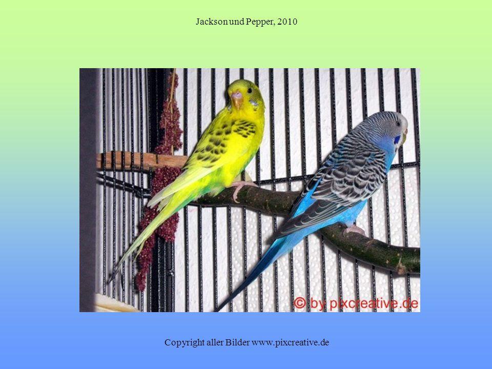 Jackson und Pepper, 2010 Copyright aller Bilder www.pixcreative.de