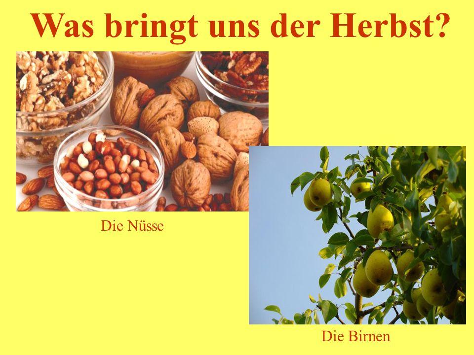 Was bringt uns der Herbst? Die Nüsse Die Birnen