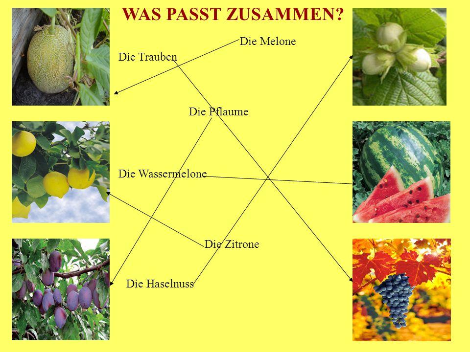 Die Trauben Die Wassermelone Die Haselnuss Die Melone Die Pflaume Die Zitrone WAS PASST ZUSAMMEN?