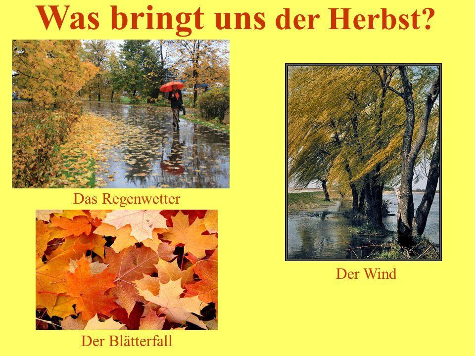 Was bringt uns der Herbst? Das Regenwetter Der Blätterfall Der Wind Der Blätterfall