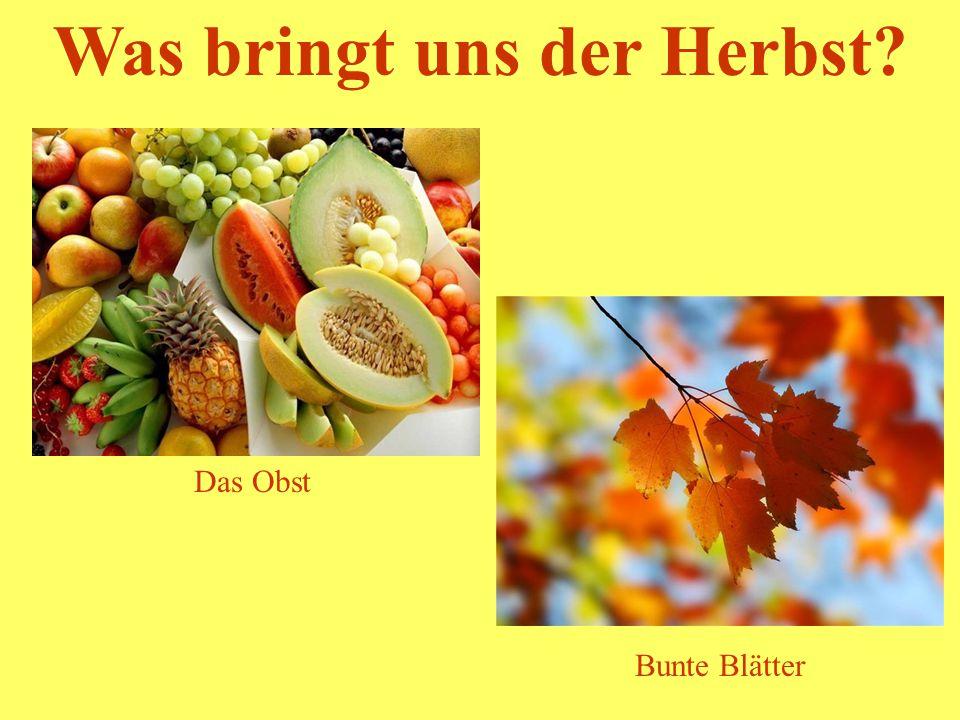 Was bringt uns der Herbst? Wirft die Äpfel runter Die Weintrauben