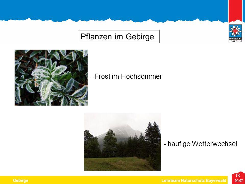18 05.07 GebirgeLehrteam Naturschutz Bayerwald Pflanzen im Gebirge - Frost im Hochsommer - häufige Wetterwechsel