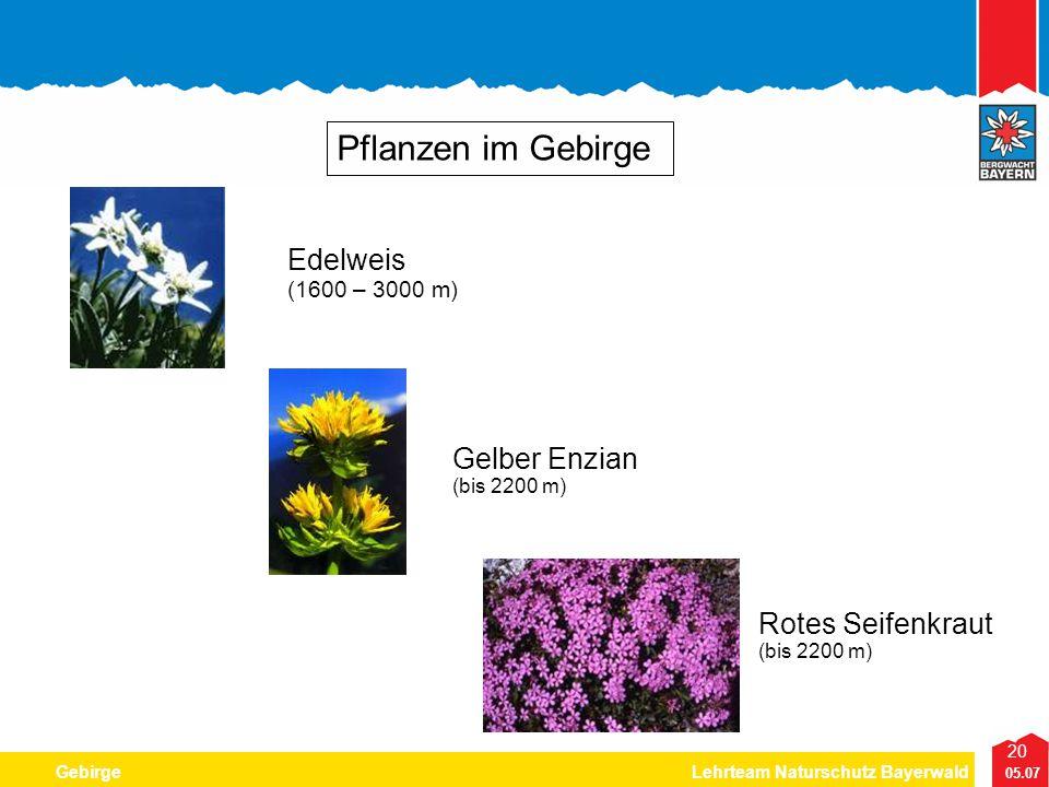 20 05.07 GebirgeLehrteam Naturschutz Bayerwald Pflanzen im Gebirge Edelweis (1600 – 3000 m) Gelber Enzian (bis 2200 m) Rotes Seifenkraut (bis 2200 m)
