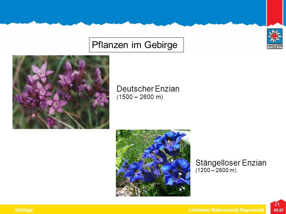 21 05.07 GebirgeLehrteam Naturschutz Bayerwald Pflanzen im Gebirge Deutscher Enzian (1500 – 2600 m) Stängelloser Enzian (1200 – 2600 m)